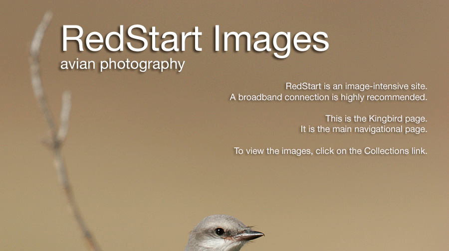 Avian Photography by Ernesto Scott. Bird Photography Collections